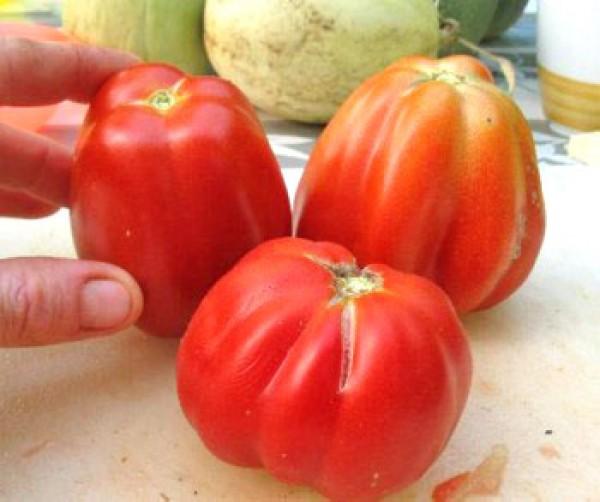 Costoluto Fiorentino Tomaten Samen