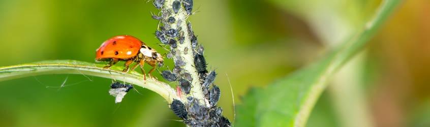 für gesunde Pflanzen