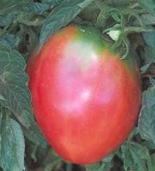 Oxheart Pink Tomaten Samen