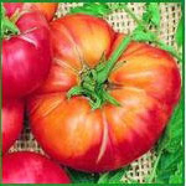 Mr.Stripey Beefsteak Tomaten Samen