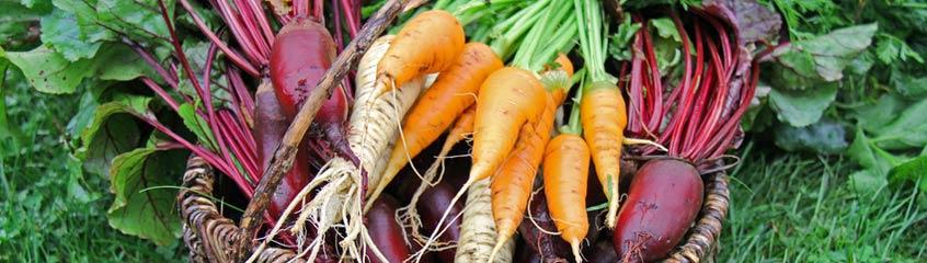 Karotten & Rüben