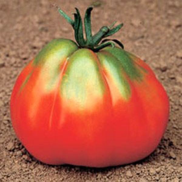 Giant Pear Red Tomaten Samen
