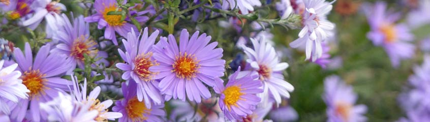 Herbstblumen1