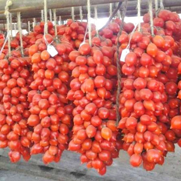 A Grappoli dInverno Tomaten Samen
