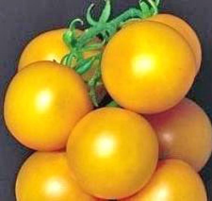 Ponderosa Yellow Tomaten Samen