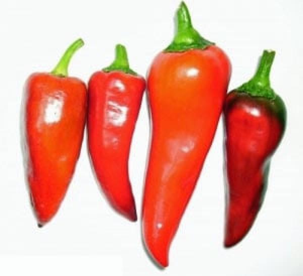Capia Pepper Chili Samen B-Ware