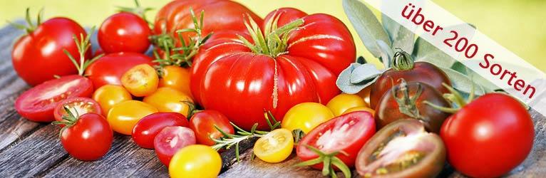 Tomaten-Samen