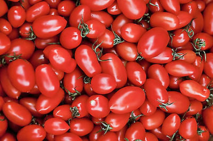Cherry Roma Tomaten Samen