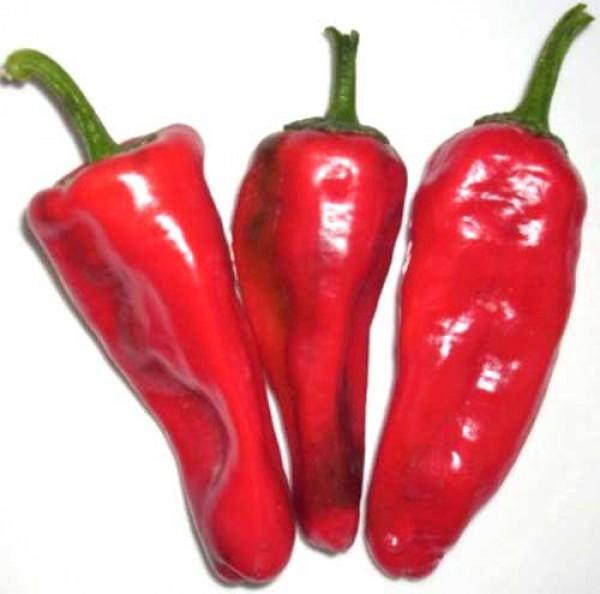 Accord Chili Samen B-Ware
