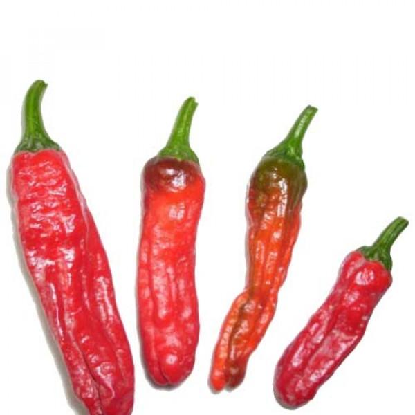 Shishito Chili Samen B-Ware