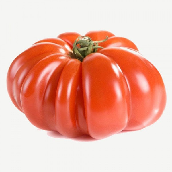 Costoluto Genovese Tomaten Samen