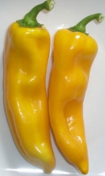 Nocera Giallo Chili Samen