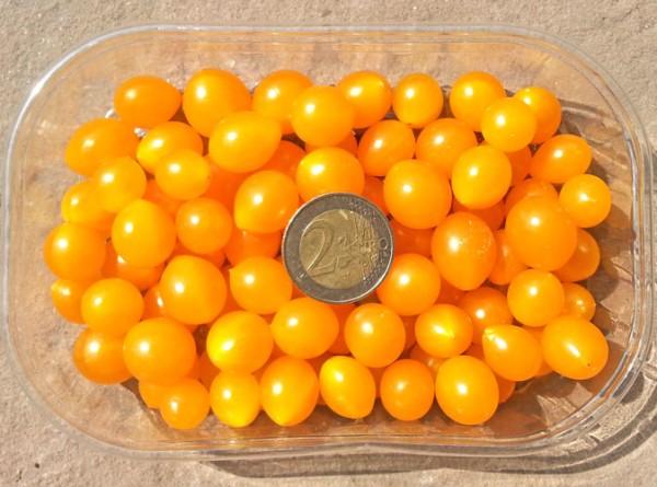 Johannisbeertomaten Samen - gelb