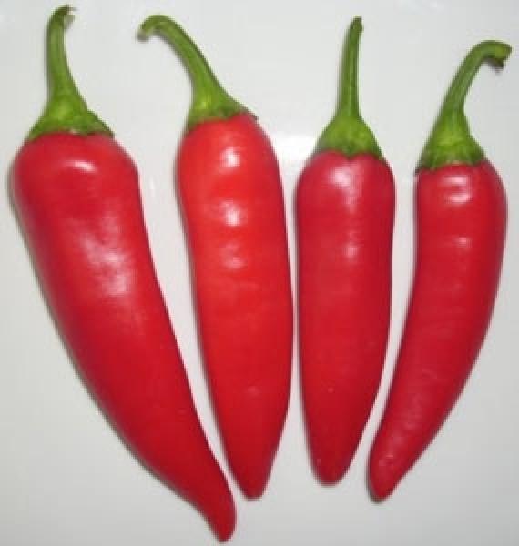 Guindilla Roja Chili Samen