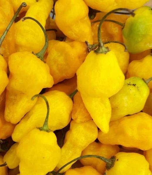 Aji Limo Chili Samen