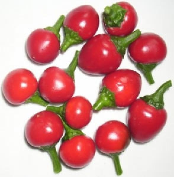 Koralle / Cseresznye Chili Samen