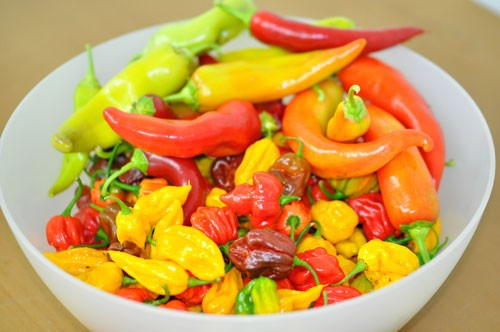 Chilis trocknen + haltbar machen
