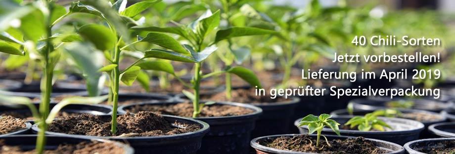 Chilipflanzen_Kategorie_9205ca7191a5f9c6