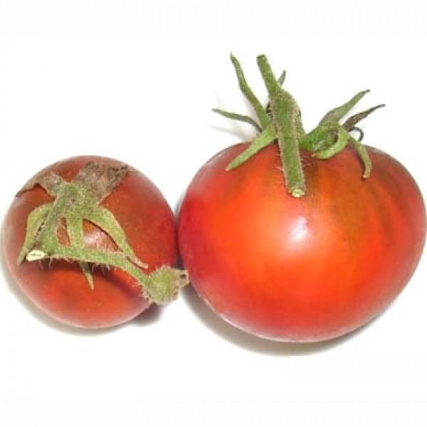 Black Truffle Tomaten Samen B-Ware