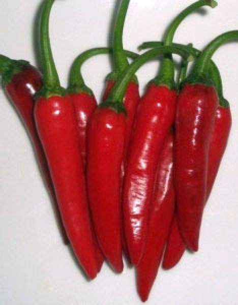 Suryamukushi Chili Samen