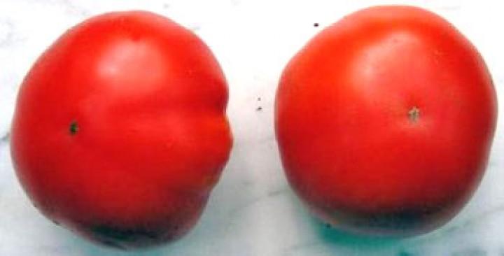 Marglobe Tomaten Samen