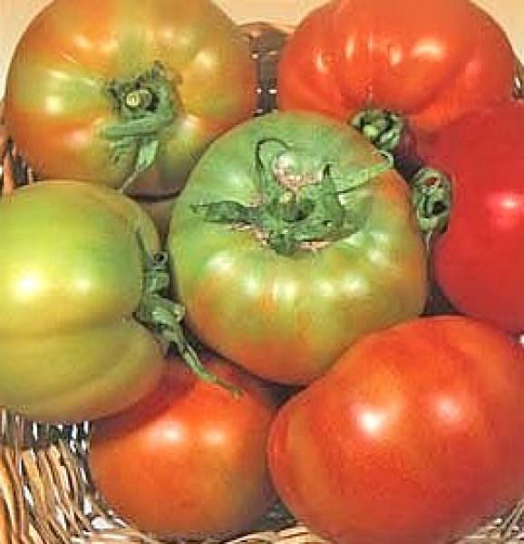 Licatese Tomaten Samen