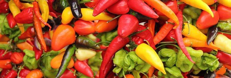Chilis selbst anbauen - Samen und Zubehör