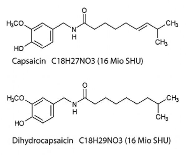 Wirkung von Capsaicin