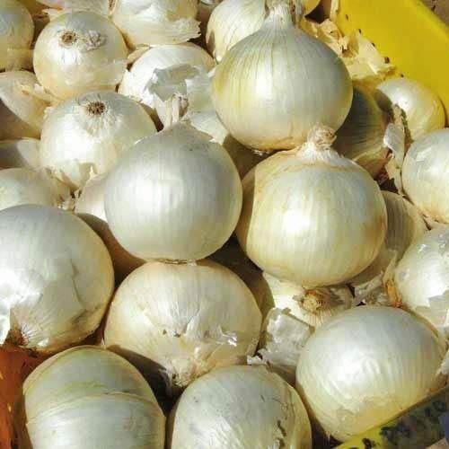 Spanische Weiße Zwiebel  50 Samen Allium Cepa
